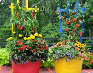 Container gardening saves space